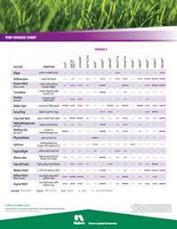Nufarm Insider 3336 F Fungicide For Tough Turf Diseases