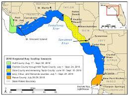 Recreational Scalloping In Florida Florida Sea Grant