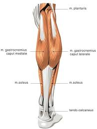 where to inject steroids in leg diagram