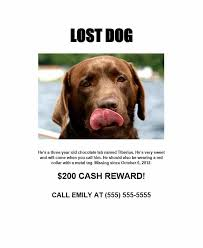 Lost Pet Flyer Maker Awesome 48 Lost Pet Flyers [Missing Cat Dog Poster] Template Archive