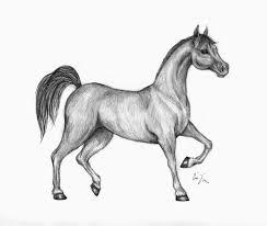 Disegni Di Cavalli Facili Dettaglio In Alto Disegni Da Colorare E