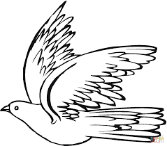 Small Picture Pigeon 19 coloring page Free Printable Coloring Pages