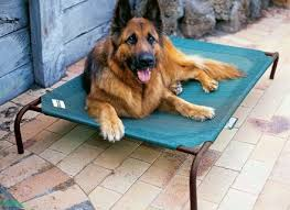 impressive outdoor elevated dog bed coolaroo dog bed with