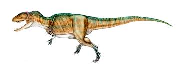 carcharodontosaurus size carcharodontosaurus facts and pictures