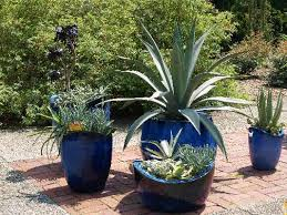 Small Picture Contain Your Plants Unleash Your Imagination East Texas Gardening