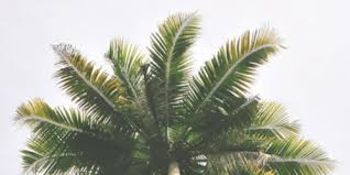 Palm trees tumblr header Summer Vibes Image Foolishhit What If Changed My Mind Palm Tree Headers