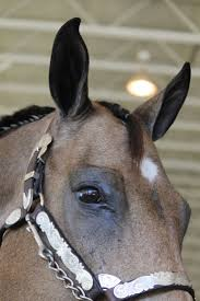Les 70 Meilleures Images Du Tableau Horse Anatomy Sur Pinterest