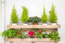 wood shelf with many colorfull flower pots disposed in a beautiful way.  Stock Photo -