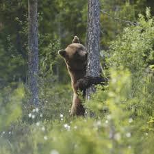 Nature Sweden Se