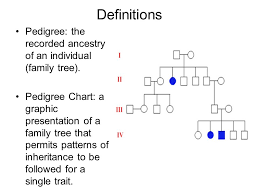 Pedigree Charts Definitions Pedigree The Recorded Ancestry Of An