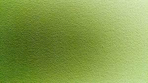 green wall paintGreen wall paint  Alegri Free Photos