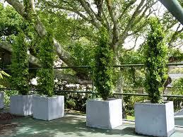 garden columns. Boxwood Columns Garden