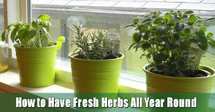 starting an indoor herb garden on your bay window ledge is easy