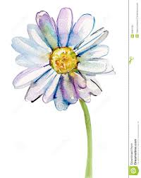 camomile flower watercolor ilration from over 46 million high quality stock photos watercolor daisy tattoodaisy paintingwatercolor