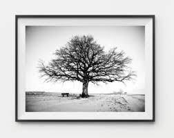oak tree art black and white wall decor tree photo print romantic winter oak fine art photography wall art trees black friday sale on wall art black and white trees with tree art etsy
