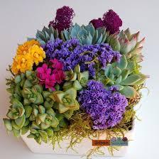 Succulent-arrangement_2016-2b