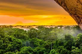 10x Natuur Behang Inspiratie Voor Bamboe Jungle En Bos Prints