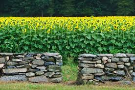 material required to build a stone wall