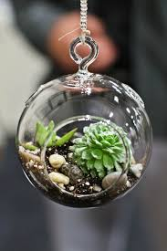 outdoor and garden photo wallpaper hanging succulent terrarium photo wallpaper hanging terrarium with succulent planting