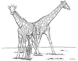 Small Picture Family Giraffe Giraffe Coloring Pages Coloring Pages For Kids