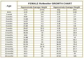 Rottweiler Puppy Growth Chart Female Rottweiler Growth Chart
