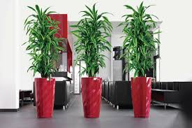 tall office plants. sweet red concrete boxes for tall decorative plants office