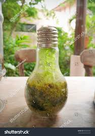Terrarium Light Plants Terrarium Light Bulb Stock Photo Edit Now 666363256