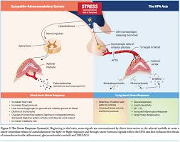 Hpa Axis The Role Of Stress And The Hpa Axis Nutrunity
