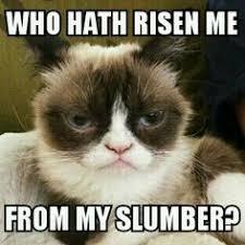 My Grumpy Cat Memes on Pinterest | Grumpy Cat, Grumpy Cat ... via Relatably.com