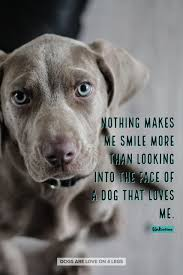 Nothing Makes Me Smile More Than Dog Dog Quotes Inspirational