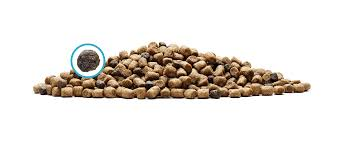 Dry Cat Food Blue Buffalo