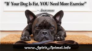 Funny Dog Quotes Classy Funny Dog Quotes