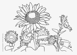 Coloring: Van Gogh Sunflowers Coloring Page