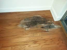 flooring a handyman company clearwater fl wood floor water damage mold