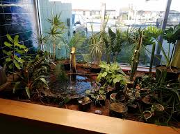 photo of oregon s constant gardener eugene or united states happy plants