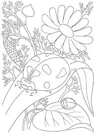 insect coloring pages preschool thanksgiving free preschool insect coloring pages