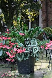 Potted Shade Plants  Choosing Shade Plants For ContainersContainer Garden Shade Plants