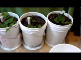 easiest how to make self watering sub irrigated planters with 5 gallon bucket milk jug