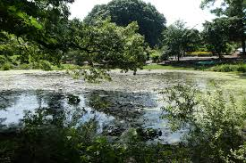 clark botanic gardens 21 by vernon brad bell