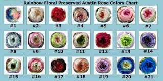 Flower Chart In English Newest Natural Preserved Flower Bulk Wholesale English David Austin Roses Buy Newest Natural Preserved Flower Bulk Wholesale English David Austin