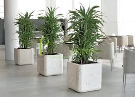 Interior landscaping office Green Space Office Plants Interior Landscaping Tropical Office Plants Live Artificial Plant Displays Interior Landscape Franchising Urban Planters Proyectolandolina Office Plants Interior Landscaping Tropical Office Plants Live
