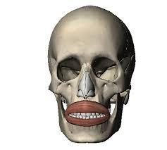 「口輪筋」の画像検索結果
