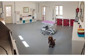 Dog Grooming Room Design The Ruby Boutique Dog Grooming Salon Whittlesey Peterborough