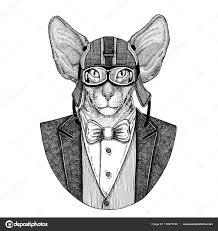 Orientální Kočka S Velkýma Ušima Rukou Nakreslené Ilustrace Pro