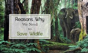 reasons why we need to save wildlife tour my reasons why we need to save wildlife