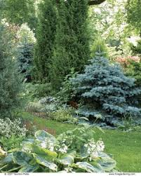 Small Picture Designing with Dwarf Conifers Fine Gardening
