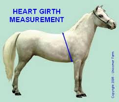 Miniature Horse Weight Chart Miniature Horse Weight Table