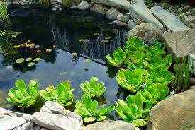 Uncategorized  Cool Beautiful Small Pond Design To Complete Your Small Ponds In Backyard