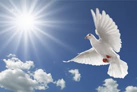 Image result for world peace day