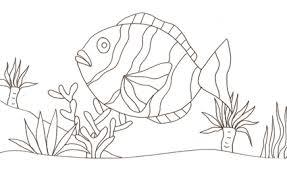 Pesce Pagliaccio Da Colorare Cose Per Crescere